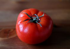 Tomato companions: what to plant near them and why.