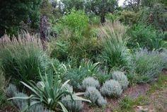 A perrenial border in the Geelong garden.