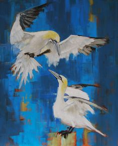 #Gannets oil on canvas #wildlife painting