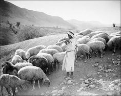 Agriculture, etc. Pastoral scene in the Jordan valley. Shepherd boy playing to his sheep 1920s Photos, National History, The Good Shepherd, Boys Playing, African Countries, North Africa, The World's Greatest, Historical Photos, Continents