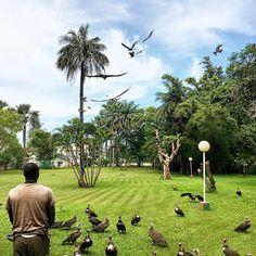"""FEEDING TIME #gambia #kololi #senegambiabeachhotel #junglebook"""