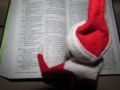 Snowflake is reading about the REAL reason for the season, Luke Chapter 2.