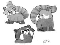 Red Panda sketches