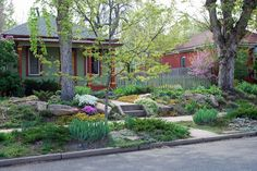 Low-growing, flowering plants in place of lawn in this Denver garden - charming & welcoming