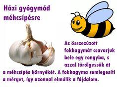 Méhcsípés   Socialhealth