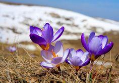Photos of spring 05