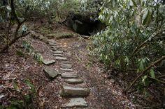 Saw a bear here, Ramsey Cascades Trail, Gatlinburg, TN Ramsey Cascades, Gatlinburg Tn, Great Smoky Mountains, Trail, Hiking, Bear, Places, Outdoor Decor, Walks