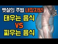 '뱃살의 주범 내장지방!' 뱃살 태우는 음식 vs 찌우는 음식 - YouTube