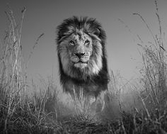 David Yarrow |THE KING AND I: another phenomenal image to consider for my home! ❤️