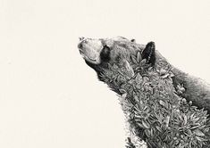 art for wildlife conservation by Nathan Ferlazzo - Google Search