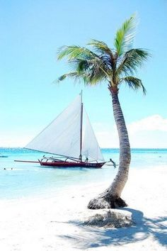 Download Free Tropical Tree Boat IPhone Wallpaper Mobile Contributed By Tomhanks1