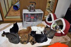 【画像】猫がストーブの前を占拠して座れないんだが(´・ω・`) : アルファルファモザイク
