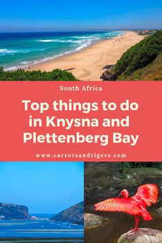 If you are planning a road trip along the famous Garden Route in South Africa, in this post I highlight the best things to do and see in the Knysna and Plettenberg Bay area. Knysna, Boho Hippie, Stuff To Do, Things To Do, Africa Destinations, Natural Garden, Africa Travel, Amazing Gardens, Stay Overnight