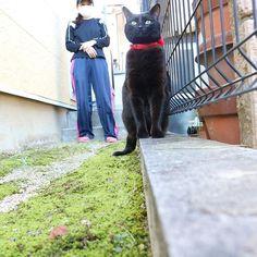 今日 の りんちゃん 座りかたかわいい オカン映ってるけど気にせんといて😂 外出して出してってごねるからだして今日も写真撮った☀️ 外あったかくて気持ちいいバイトやん🙄誰か31いこよ。ソフトバンクちゃうけど #猫#黒猫#愛猫#ネコ#CAT#🐈#撮影#庭#一眼レフ#canon#rin