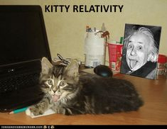 KITTY RELATIVITY http://cheezburger.com/9105479936