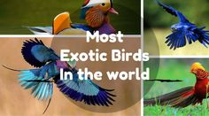 Most Exotic Birds Ever