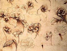 Da Vinci flowers
