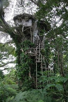 This one looks like the real thing.  .  .  .  A real house literally in a tree.  Based on the jungle-like environment, it's probably the safest place to be !!   ✯ ♥ ✯ ♥ image credit:  http://ffffound.com/image/7e61bd139d1086a30df1a056a461eeb0f38a3c0c ✯ ♥ ✯