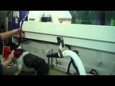5 mobile pet grooming business dog grooming ideas for business dog grooming in a wag n tails mobile grooming van httpwww solutioingenieria Choice Image