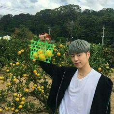 When life gives you lemons, give them to Koo Junhoe so he can take cute pictures <<<< I'm yelling Kim Jinhwan, Hanbin, Yg Ikon, Live Meme, Yg Entertaiment, Sassy Diva, Koo Jun Hoe, Ikon Debut, Jay Song