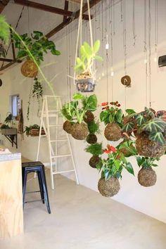 hanging-planten
