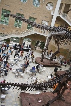 Dine below natural history at Fernbank Museum. Photo by Powers', via Flickr