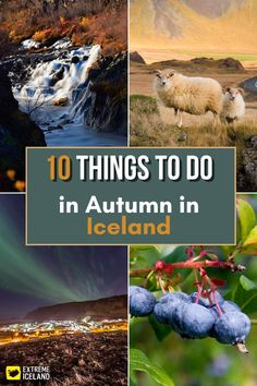 Autumn is the perfect time of year to visit Iceland. The nature is beautiful and colorful this time of year with rainbows, red and gold leaves against a dazzling blue sky, wild mushrooms, and an abundance of tasty berries that sweeten our daily lives. Iceland Travel Tips, Travel Europe, Cultural Events, Mountain Hiking, Wild Mushrooms, Digital Nomad, Amazing Destinations, Rainbows, Abundance