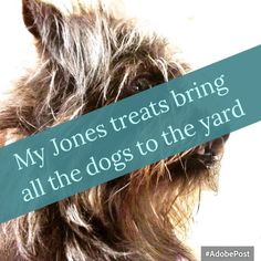 My Jones treats bring all the dogs to the yard