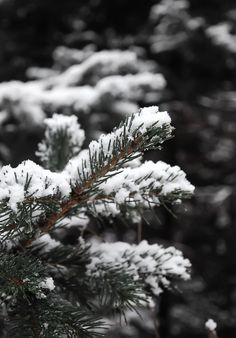 Since I talked about how winter already here in my last post, I thought it would be very appropriate to share some photos I took w...