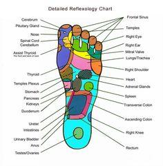 Foot reflexology chart. Réflexologie plantaire | Zen Attitude