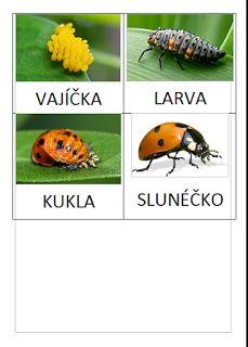 Blanche - Křížem krážem: Slunéčko - vývoj Elementary Science, Life Cycles, Biology, Ladybug, Bee, Education, Animales, Zoology, Insects