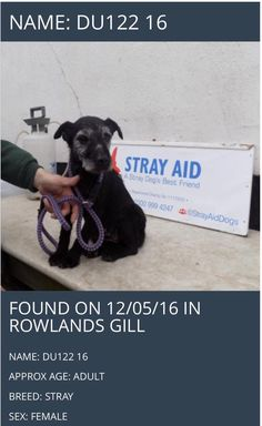 Are you missing a dog like the one shown below?This dog was found by the organisation StrayAid in Rowlands Gill on 12/05/16.Please help get this dog returned back to it's owners.