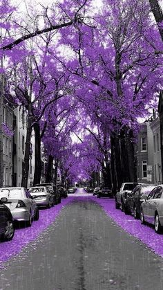 Purple Fall Rain