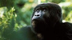 Endangered Species Master Trivia - Trivia - Zimbio