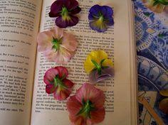 bougie personnalisée avec des fleurs séchées entre les pages d'un bouquin de grand format