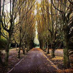 Autumn at Vestre cemetery