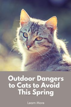 The weather is improving and some cats may be showing more interest in going outside. Here we discuss some outdoor dangers to be aware of when outside with your cat