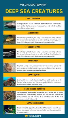 Deep sea Creatures | List of 7 Creatures from the Deep Sea Frilled Shark, Goblin Shark, Leafy Sea Dragon, Ugly Animals, Creature Picture, Essay Writing Skills, Visual Dictionary, Pretty Names, Deep Sea Creatures