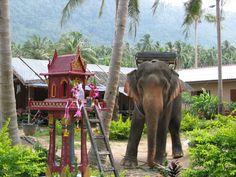 Thailand ; koh samui ; elephant trekking