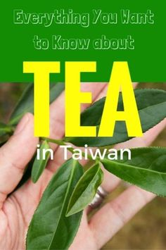 Tea in Taiwan by Nick Kembel Pinterest graphic