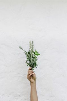 One of the natural remedies available for a generative living is to use herbs. Herbs help with so many things, from easing inflammation to reducing chronic pain. Ayurveda, Weight Loss Tea, Best Weight Loss, Hand Pictures, Nature Pictures, Free Pictures, Holistic Health Coach, Holistic Nutrition, Mental Health