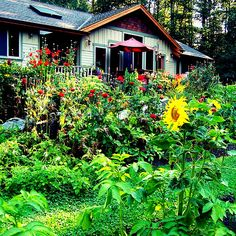 Stay in the pacific northwest #Washington #USA FREE via housesitting, see details by clicking on the above image!