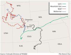 U S Mountain Lion Population A slightly diff...