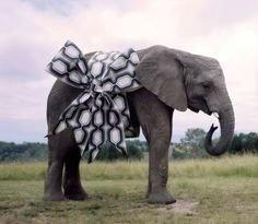 How to wrap an elephant. just in case someone wanted to get me one . . . Elephant Strength