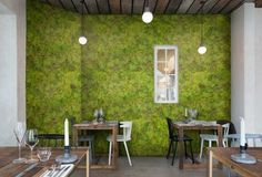 Green Carpet (P192801-6) - Murals Murals - Photographic image of soft, green moss- bringing the forest floor to the wall! Total mural size 270cm wide x 300cm high. Unfortunately, samples are unavailable. Paste-the-wall product.