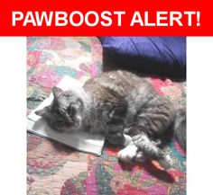 Please spread the word! Meelo was last seen in Miami, FL 33187.    Nearest Address: Near 150th Ct & 183rd Ter