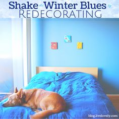 Shake the Winter Blues by Redecorating Your Apartment | Check out these great tips for bringing a more positive, open atmosphere to your apartment!