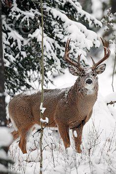 John E Marriott's Wildlife Photography Blog: Photo of the Day - White-tailed Buck