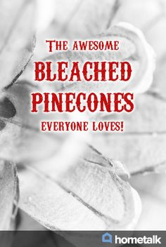 The awesome bleached pinecones everyone loves!
