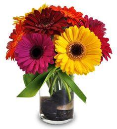 Vibrant hued Gerbera daisies